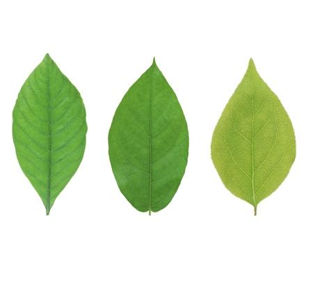 forestation: Green leaf