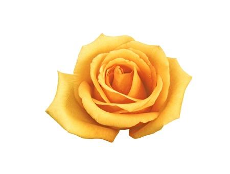 buttercream: rose buttercream