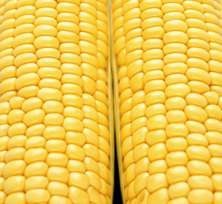 Background corn or texture photo