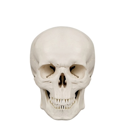 Humane: human scull isolated on white background Stock Photo