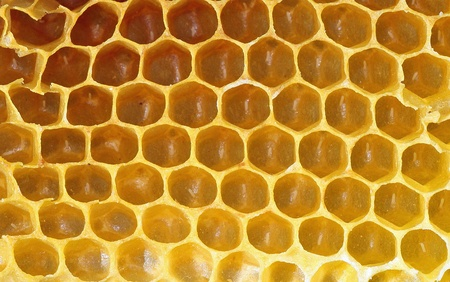 Honeycomb background or texture photo