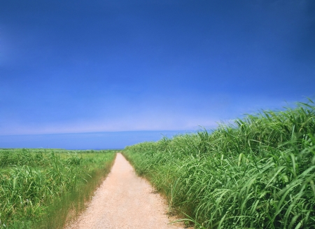 Winding Path in a Green grass and blue sky photo