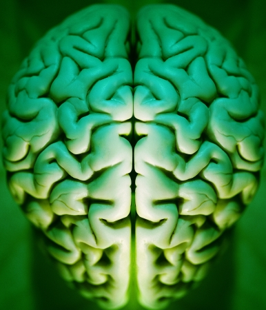 alpha: Human brain abstract, alpha, anatomy, art, brain, Stock Photo