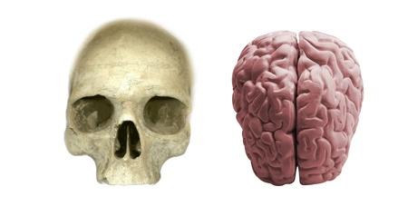 brainy: skull with brain isolated Stock Photo