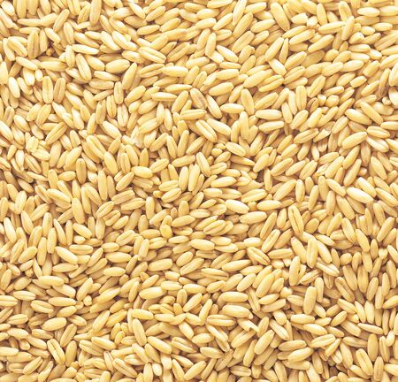 natural oat grains background photo