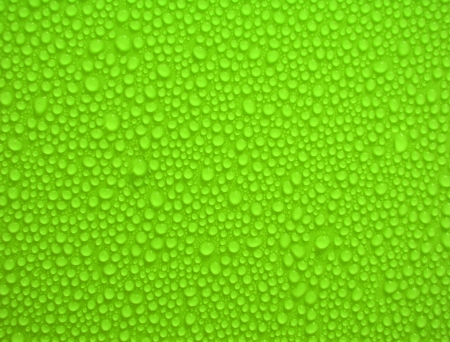 water-drops on green  photo