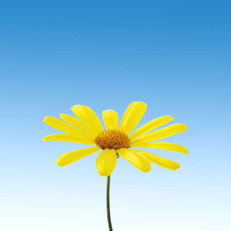 yellow flower on sky photo