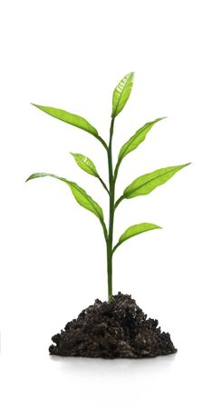 Seedling green plant on a white background Stock Photo - 14729032