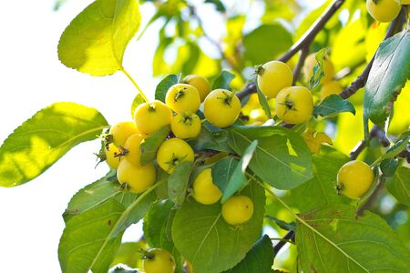 fascicule: ashberry