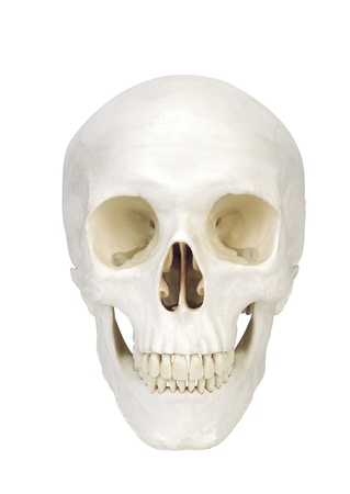 human scull isolated on white background Stock Photo - 16414814