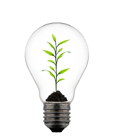 plant growing inside the light bulb photo