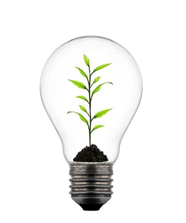 growing inside: plant growing inside the light bulb