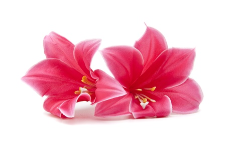 pink flower isolated on white background photo