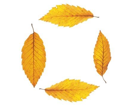 Autumn maple leafs background photo