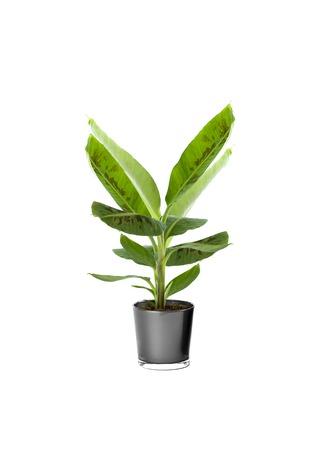 Ornamental Plants over white background