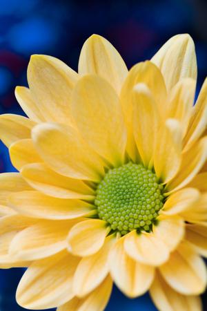 花びら: beautiful yellow flower petals closeup