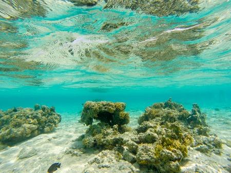 Adembenemend onderwater uitzicht op de Rode Zee, Egypte Stockfoto