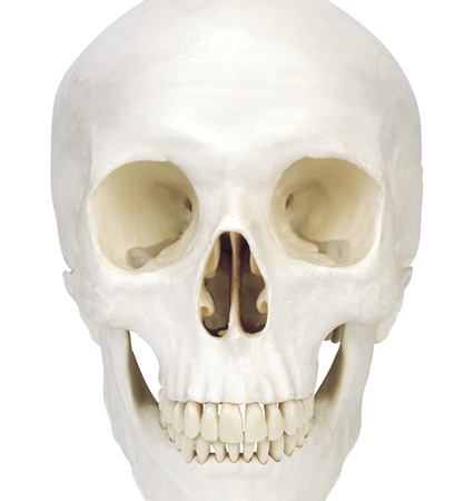 human scull isolated on white background Stock Photo