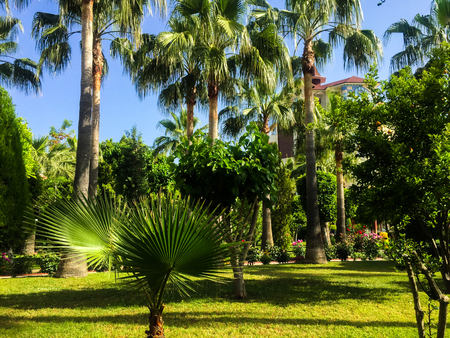 Exotic trees in a park