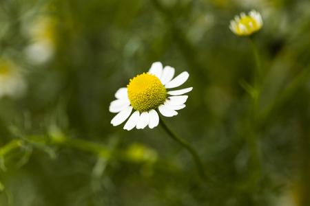 Daisy closeup Stok Fotoğraf