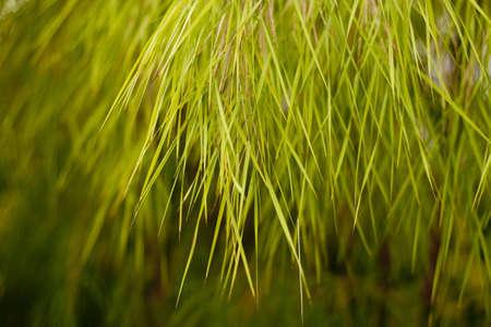 Grassy tree Stock Photo