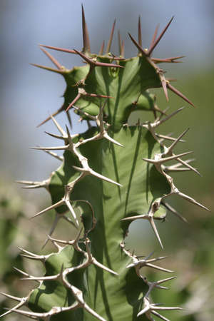 Spiky cactus Stock Photo