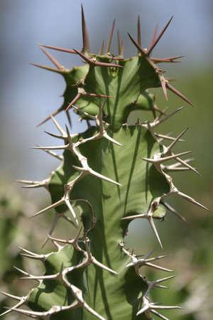 Spiky cactus Banco de Imagens
