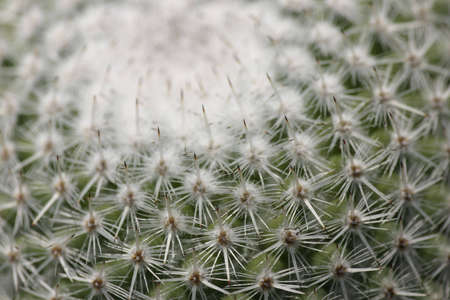 Geomteric pattern in a cactus
