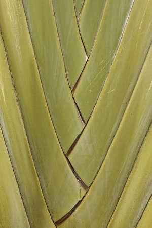 Palm macro vertical