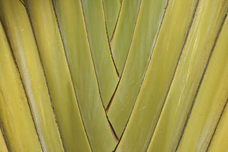 Palm macro horizontal Stock Photo - 5697767