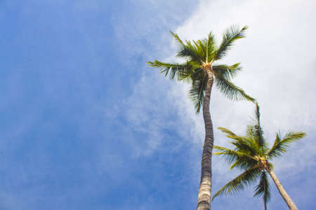 Palm trees from below Stock Photo