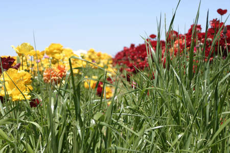 Red and yellow flowers in a field with a blue sky