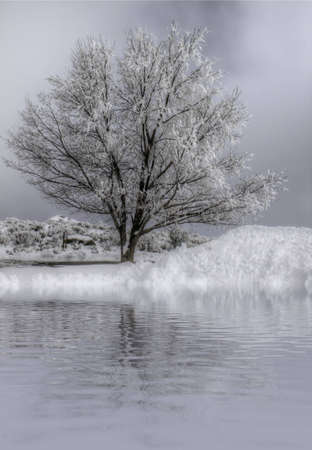 A snow covered tree in front of water against an overcast sky