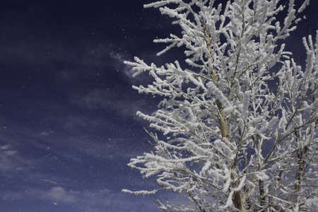 A snow covered tree against a beautiful deep blue sky and a few light clouds Stock Photo