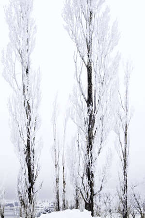 Snow covered tree with a lake in the background Stock Photo