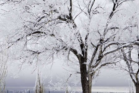 Snow covered trees with a stormy sky Banco de Imagens