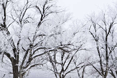 Snow covered trees with a stormy sky photo