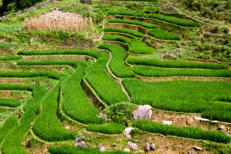 Stepped rice patty terraces in the north Vietnamese city of Sapa Banco de Imagens - 9367094