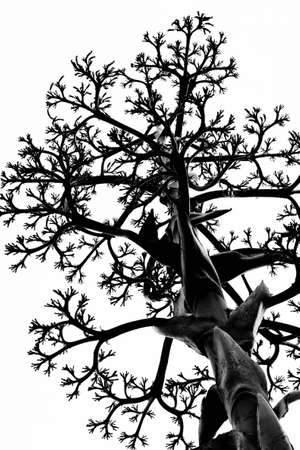 Black tree branches against a white background Stock Photo - 9304248