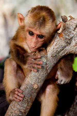 A baby monkey outside a cave on a beautiful Railay Beach, Krabi, Thailand Stock Photo