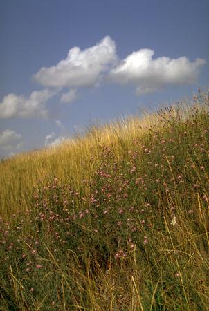 Ozarks native grassland-vertical