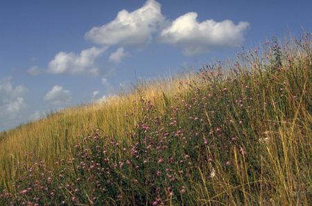 Ozarks native grassland-horizontal
