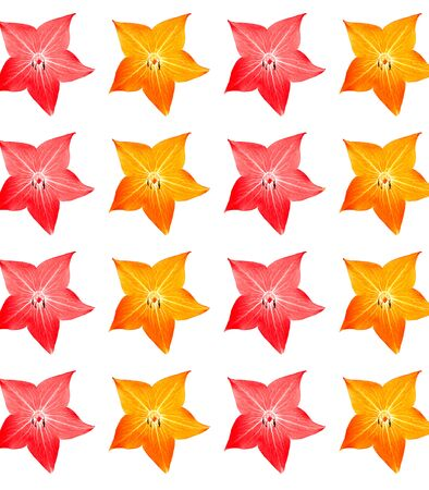 Seamless floral pattern with star-shaped orange and red flowers against a white background. Design wallpaper, fabrics, postal packaging, wall decor.