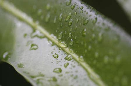 green leaf macro Stock Photo - 946076