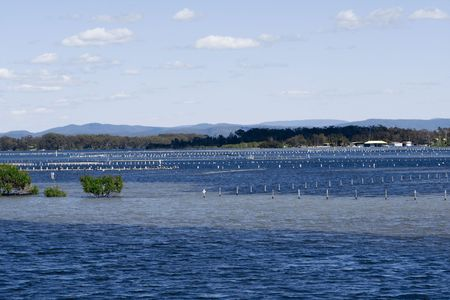 great bay: Oyster Farms in Forster