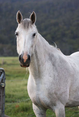 Horse Portrait Stock Photo - 2557422