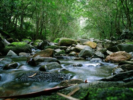 Rainforest and River photo