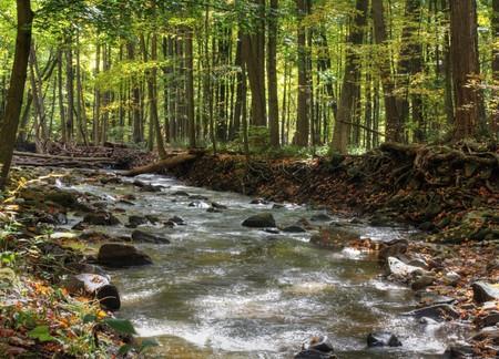 flowing river: Un r�o que fluye por el bosque de oto�o