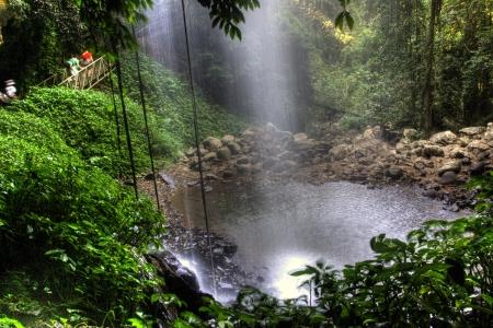 feuille de vigne: Healthy forêt tropicale et d'eau vive du ruisseau et des rochers