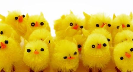 Wielkanoc tło dekoracyjne z kurcząt w gniazdo Zdjęcie Seryjne